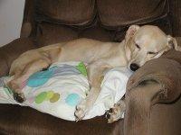 goldie-asleep.jpg